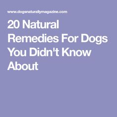 20 Natural Remedies For Dogs You Didn't Know About