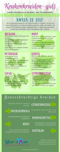 Keukenkruiden-gids printable - Another! Balcony Garden, Green Plants, Herbal Remedies, Food Hacks, Gardening Tips, Herbalism, Infographic, Veggies, Herbs