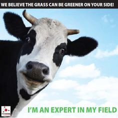 We Believe the Grass Can Be Greener on Your Side www.networkexplosion.co.za