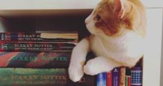 Introduction to Booklr: Bookish Tumblrs to Follow