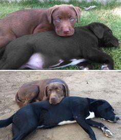 Inseparable then and now