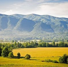 Cades Cove in summer went here Horse back riding a must see.Going to go here next summer and travel to the other side of the carolinas through the mountains such a fun place for family or couples!
