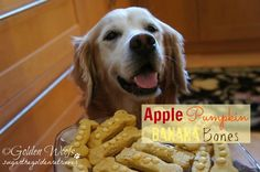 DIY Pets : Tasty Tuesday: Apple Pumpkin Banana Bones Apple Pumpkin Banan Bones Dog Treat: Sugar The Golden Retriever Sharing is caring, don't forget to share ! Pumpkin Dog Treats, Homemade Dog Treats, Healthy Dog Treats, Easy Dog Treat Recipes, Dog Food Recipes, Puppy Treats, Dog Cookies, Dog Items, Dog Biscuits