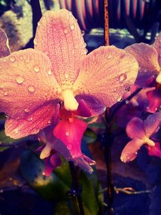 Orchid <3