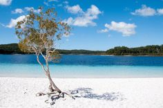 Fraser Island, Australia. Just up the road from where I live, and you can not get more stunning this.