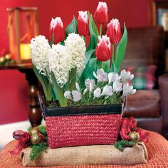 Amazing Elegant Holiday Mixed Bulb Garden   This Mix Of Iconic Spring Plants Is The  Perfect Gift For That Gardener That Misses Their Favorite Blooms.