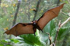 Bats live everywhere but the poles and deserts or extreme temperatures.