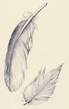 Early Bird feathers (bic-pen)- koosjekoene.blogspot.com