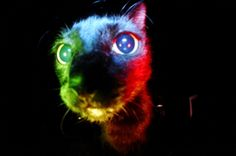 Achieve the perfect results, surround your lens with a burst of perfectly-even light with the Ringflash! Alternative Photography, Lomography, Film Photography, Kitty, 10 December, Cats, Advent, Shop, Rainbow