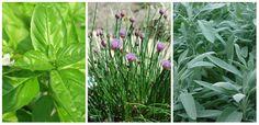 Top 9 plante aromate. Ti le dezvaluim in articolul de astazi