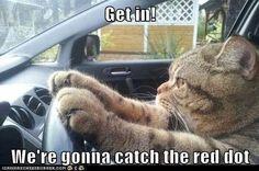 Gotta love funny cat pictures!