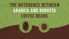 The Difference Between Arabica and Robusta Coffee Beans Coffee Good For You, How To Order Coffee, Arabica Robusta, Coffee Mugs With Logo, Coffee Facts, Espresso Bar, Unbelievable Facts, Decorating Coffee Tables, Hot Coffee