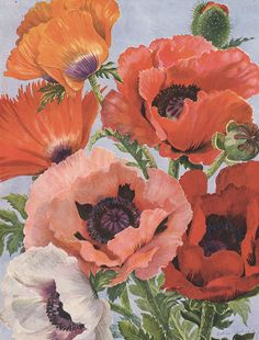 Noel Kingsbury presents the science and symbolism of Papaver plants—including the iconic perennial poppy—and 132 other important plant groups in GARDEN FLORA. Step into the lush history of flowers and their meanings.