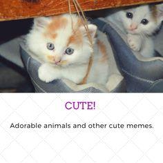Cute animal photos!