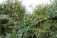 Suvikumpu: HAVUSYDÄN JA -KRANSSI - ohje Diy Wreath, Christmas Wreaths, Herbs, Crown Flower, Wreaths Crafts, Herb, Diy Garland, Medicinal Plants