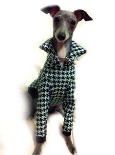 【楽天市場】犬服工房パネルラインTシャツ&パーカ イタグレ&ウィペットサイズ IS&IM:CELEBDOG