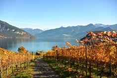 19 schöne und leichte Herbstwanderungen Schweiz - Wandern im Herbst Go Hiking, Wanderlust, Swiss Alps, Mountains, Nature, Travelling, Holidays, Switzerland Destinations, Hiking Trails
