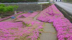 4-japonya-cicek-bahcesi: