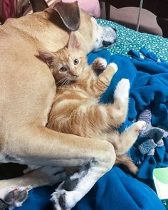 Image of: Petsmart Kitten Rescued From Van In Parking Lot Finds His Perfect Friend In Dog Animal Shelters Near Me Stuart Magazine 21234 Best Animal Rescue Images In 2019 Animal Rescue Pet