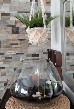 Cómo hacer un Terrario Ficus, Terrarium, Home Decor, Home Interiors, Terrariums, Decoration Home, Room Decor, Figs, Home Interior Design