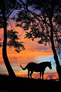 sunset mare by gypsymarestudios on Flickr.