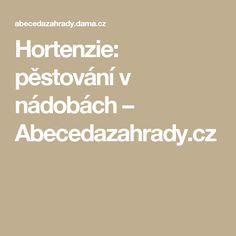 Hortenzie: pěstování v nádobách – Abecedazahrady.cz