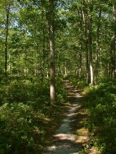 Belleplane State Forest
