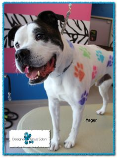 Yes i am a little angel and i yes i would do this fur wonder dog a dog spa with dog hair dye solutioingenieria Image collections