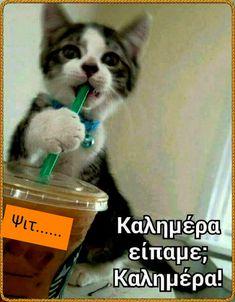 Good Night, Good Morning, Cute Baby Animals, Cute Babies, Funny, Mornings, Emoji, Facebook, Reading