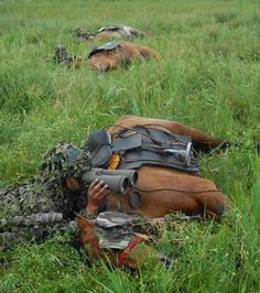 War Horses. Highly trained, and against all their instincts these Horses will lay still during a battle. This is an example of an incredible trust and bond between Man and animal.