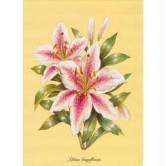 Image 3D Fleur - 2 liliums 24 x 30 cm