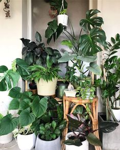 How to Plant Potted Flowers Outdoors in the Soil : Garden Space – Top Soop Green Plants, Tropical Plants, Potted Plants, House Plants Decor, Plant Decor, Planting Succulents, Planting Flowers, Plants Are Friends, Bathroom Plants