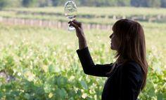 Claves para aprender a reconocer los diferentes tipos de vinos blancos https://www.vinetur.com/2014060415686/claves-para-aprender-a-reconocer-los-diferentes-tipos-de-vinos-blancos.html