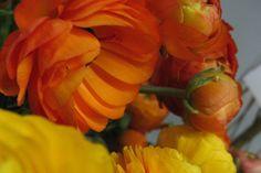 Flowers | En Masse Flowers | Frederick, Maryland 21701