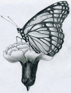 Beautiful! A month butterfly on a budding carnation.   pencil drawing flowers: hasso