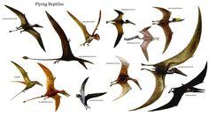 Flying Dinosaurs | Flying Reptiles - Bird Like Dinosaurs Wallpaper Image