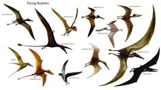 Flying Dinosaurs | Flying Reptiles - Bird Like Dinosaurs Wallpaper Image