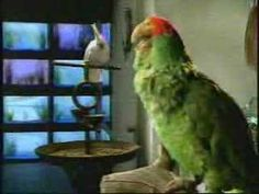 ▶ Budweiser SuperBowl Commercial Parrots - YouTube