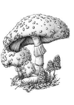 Mushrooms Forest Fungi and Banana Slug by bigredsharks on DeviantArt Mushroom Drawing, Mushroom Art, Illustration Botanique, Botanical Illustration, Ink Pen Drawings, Black And White Drawing, Black Pen Drawing, Ink Illustrations, Drawing Techniques