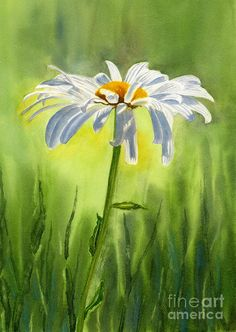 Single White Daisy  Painting  - Single White Daisy  Fine Art Print