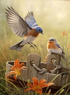Features larger pieces Beautiful Hautman Brothers artwork Lovely picture of birds in nature made in the United States Bonus poster inside Exotic Birds, Colorful Birds, Tropical Birds, Pretty Birds, Beautiful Birds, Wonderful Flowers, Beautiful Fairies, Bird Pictures, Little Birds