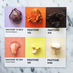 pantone12