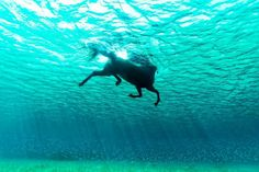 Diferent kind of seahorse.