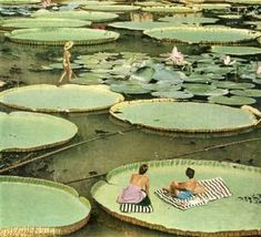 Original Nature Collage by Maya Land Nature Collage, Dada Art, Unusual Plants, Environment Concept Art, Green Nature, Nature Images, Water Lilies, Exotic Flowers, Vintage Photography