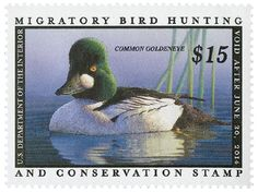 2013 $15 Common Goldeneye Hunting Permit for sale at Mystic Stamp Company