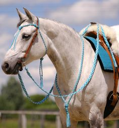Show off your special bridles ! – page 157 - Modern Barrel Racing Saddles, Barrel Racing Horses, Horse Gear, Horse Tack, Breyer Horses, Horse Halters, Horse Saddles, Cute Horses, Horse Love