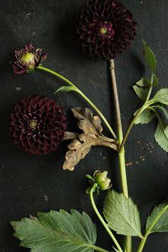 Black on Bloom