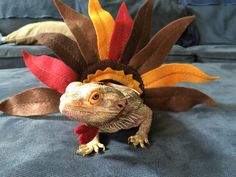 Turkey Costume for Bearded Dragons! One size fits most. by PamperedBeardies on Etsy https://www.etsy.com/listing/208791344/turkey-costume-for-bearded-dragons-one