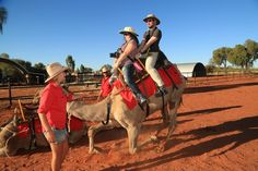 Tourist Attraction - Uluru Camel Tours