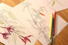 Printable - Coloring Chilean Endemic Plants Set 1 by MiNaturalismo on Etsy